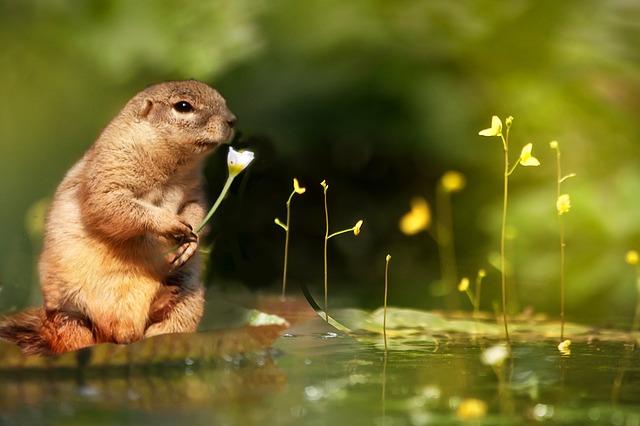 squirrel-610864_640