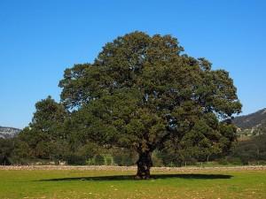 tree-1117744_640