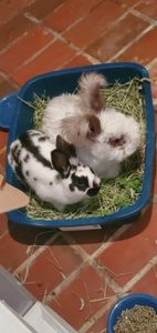 Three bunnies in a bed