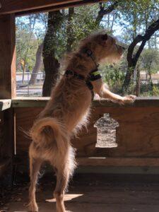Trek at the dog park